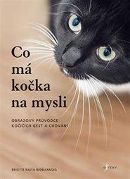 Černá kočička dokořán otevřené obrázky